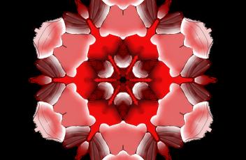 mandala-pink-2430020_960_720