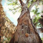 A Roma gli alberi parlano: ecco Plants Play e Platani, la nuova iniziativa di Yourban2030